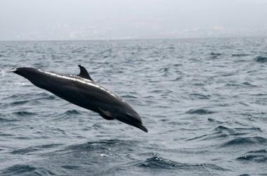 rencontre avec dauphins planete sauvage
